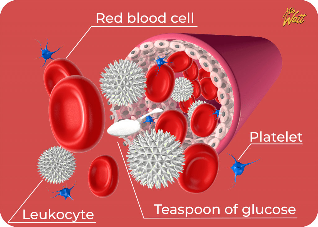 Scientific evidence of a teaspoon of glucose circulating in the bloodstream